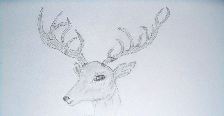 Deer - Holly's Gallery of Art