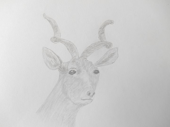 Mountain Goat - Holly's Gallery of Art