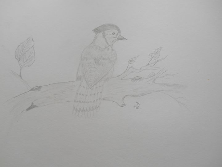 Bird on a branch - Holly's Gallery of Art