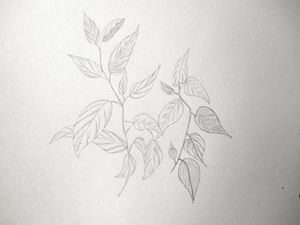 Leaves - Holly's Gallery of Art
