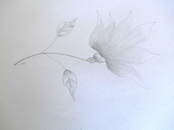 Flower - Holly's Gallery of Art