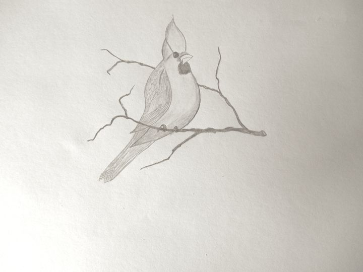 Bird - Holly's Gallery of Art