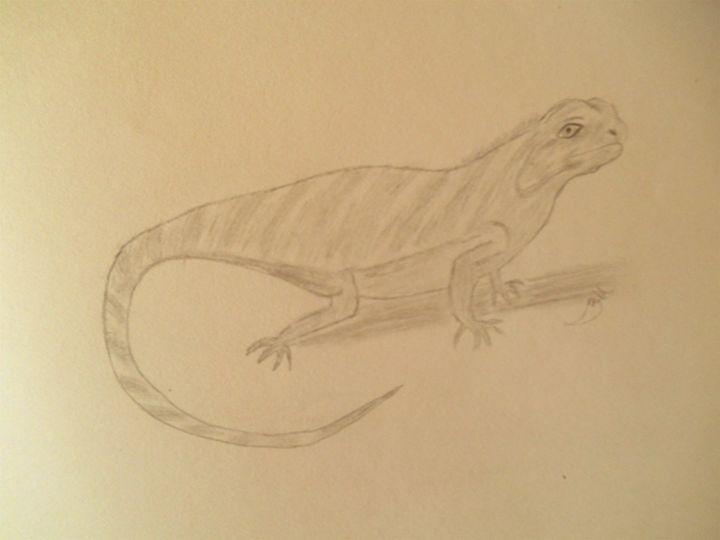 Lizard - Holly's Gallery of Art