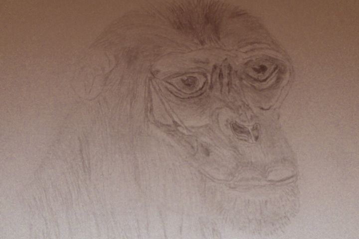 Ape - Holly's Gallery of Art