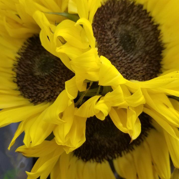 Sunflower Kiss - Plant Murmurs