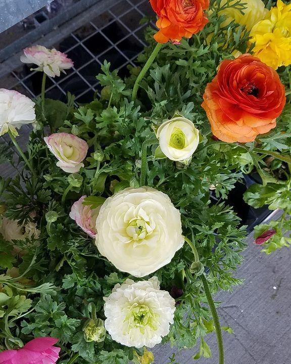 Spring Flowers - Plant Murmurs