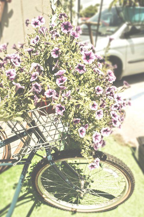 A Pleasant Ride - Sunflower Photo