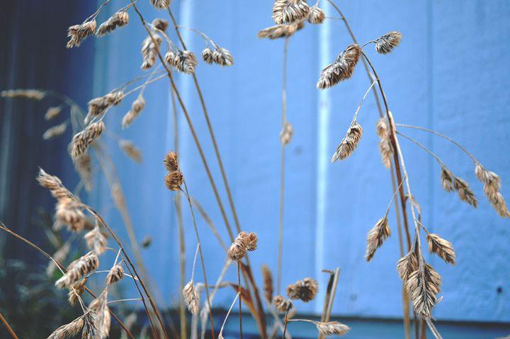 Summer - Sunflower Photo