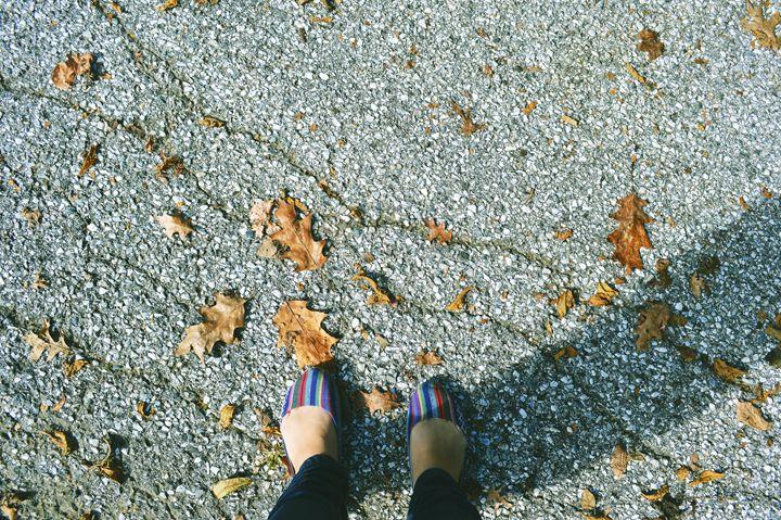Autumn Leaves - Sunflower Photo