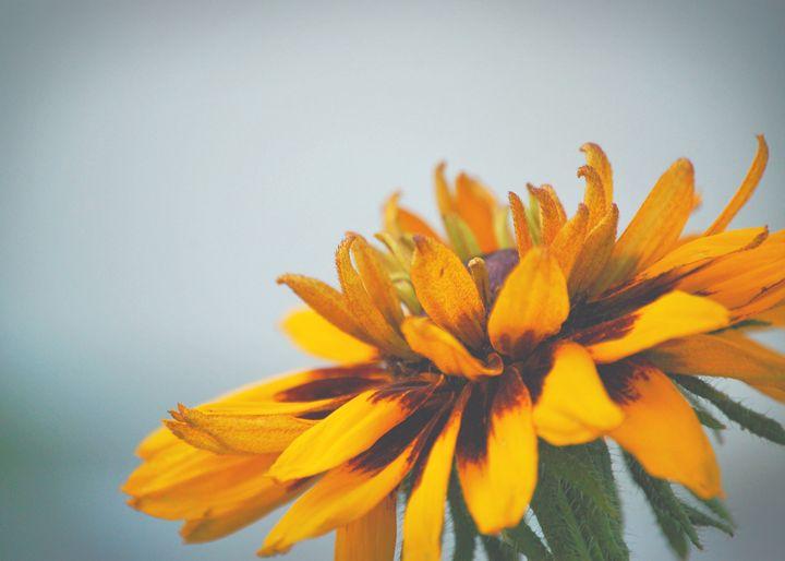 Flower Vision - AWH Art & Photography