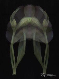 Surreal Flower #5