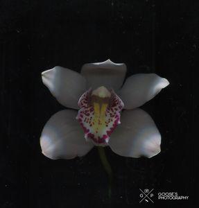 Surreal Flower #6