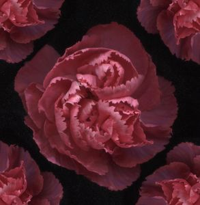 Surreal Flowers #9