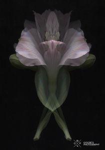 Surreal Flower #3