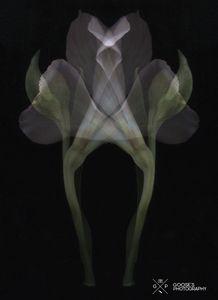 Surreal Flower #4