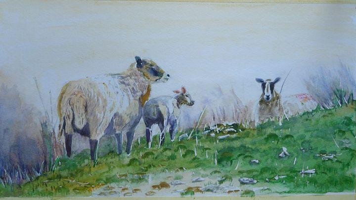 Where sheep may graze - Sheilah's Art