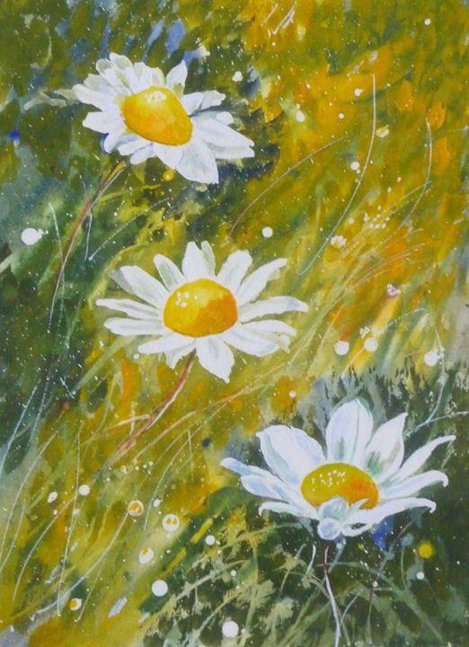 Wild daisies. - Sheilah's Art