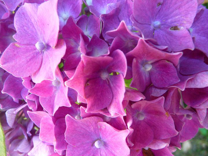 Flowers in my garden - Sheilah's Art