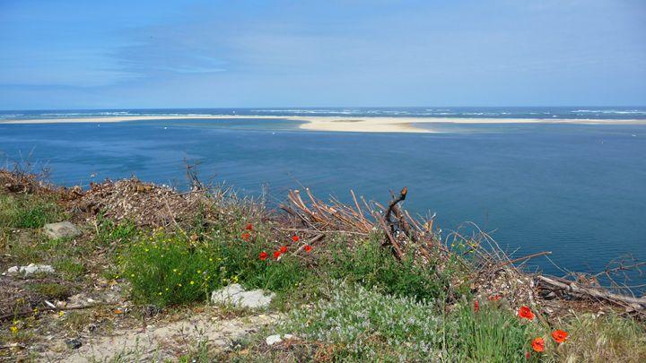 La Dune du Pilat, Bassin d'Arcachon - Sheilah's Art