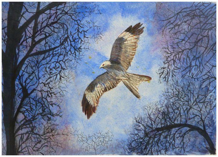 Buzzard in Flight - Sheilah's Art
