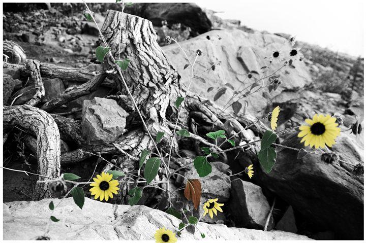 Sun Flowers -  Kellthemighty