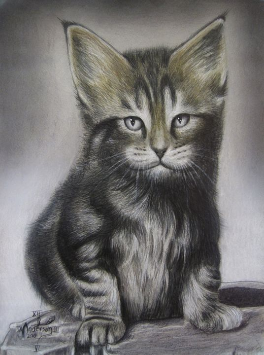 Maine Coon kitten in colored pencil - Jonathan Anderson Artist