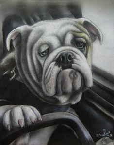 Bulldog at the wheel