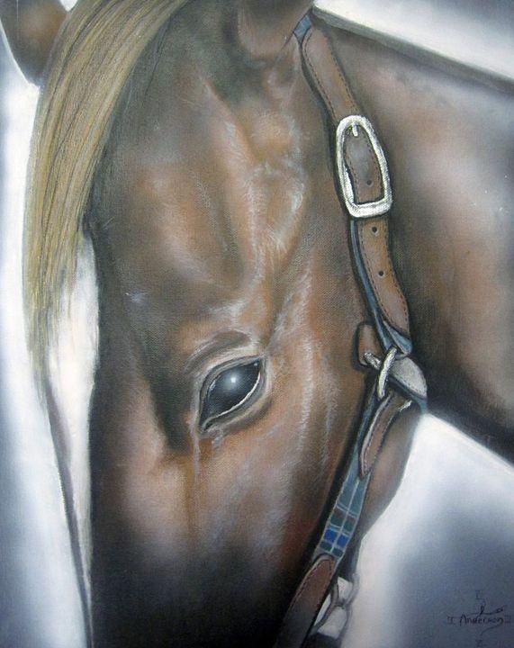Horse close up - Jonathan Anderson Artist