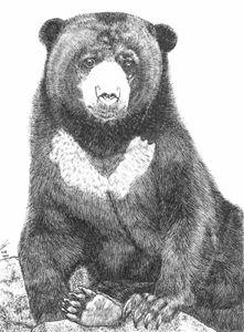 Malayan sun bear (Beruang Madu)