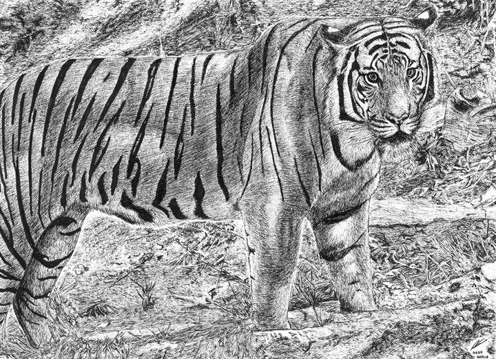 Malayan tiger (Harimau) - Nasir Nadzir