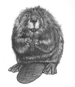 beaverman