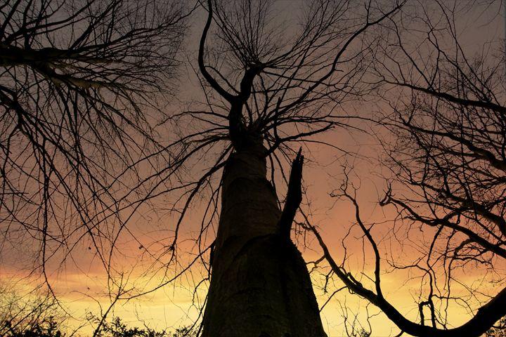 Tree's of Gold - Simon Hark