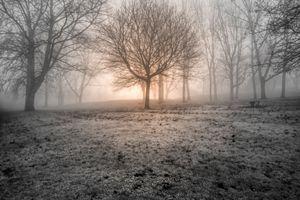 Trench Mist