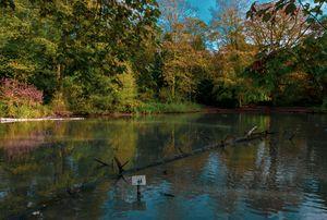 Apley Woods pond
