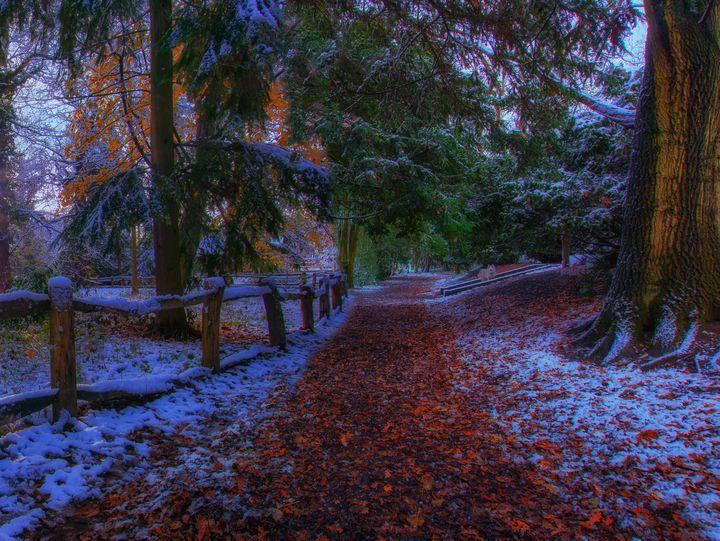 Apley Woods - Simon Hark