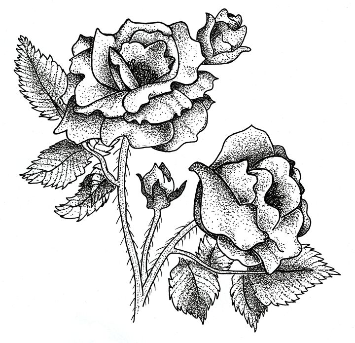 Ink Roses - L. Carleton Art