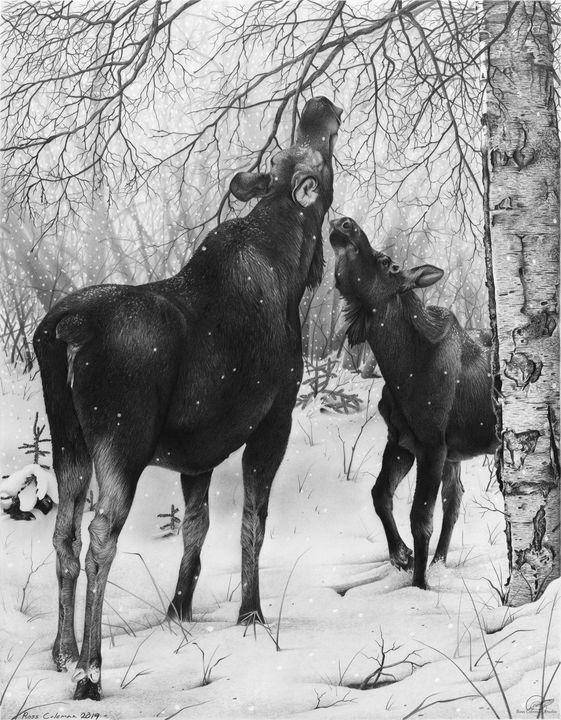 Moose With Calf - Ross Coleman Studio