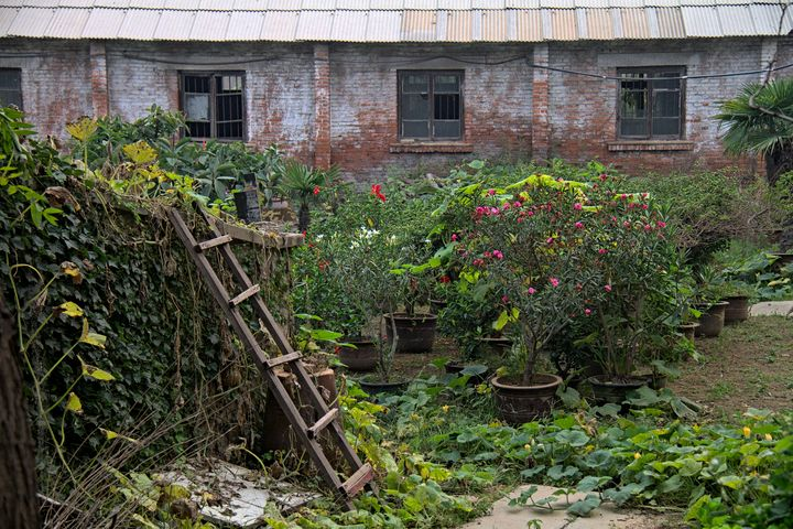 Back Garden - Pixtrinsic