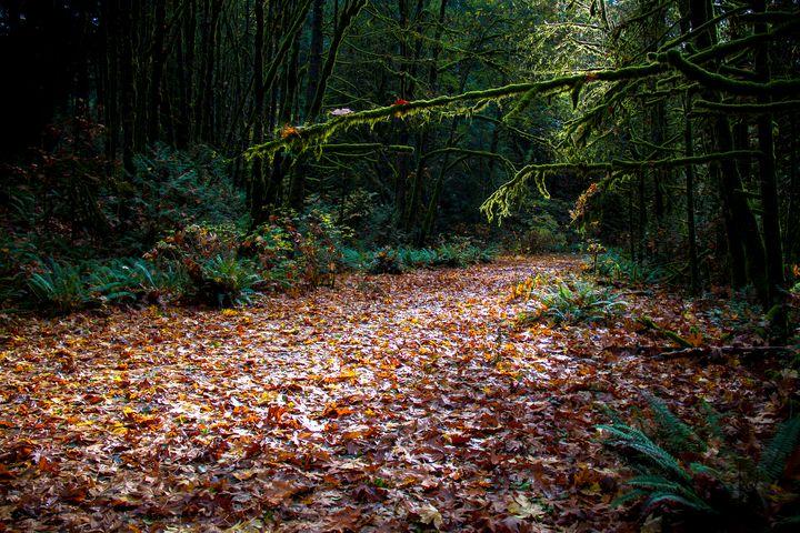 Into The Dark Forest - Pixtrinsic
