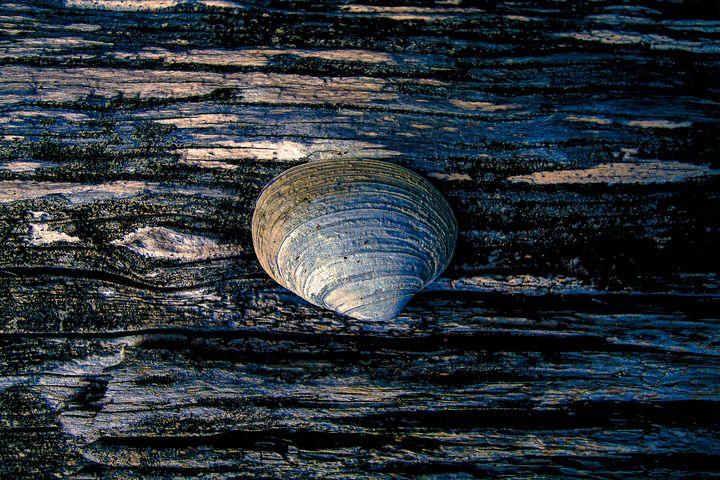 Shell at Sunset - Pixtrinsic