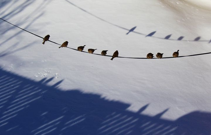Birds Out on a Snowy Day - Jacqueline Rodriguez