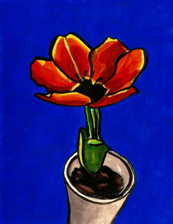 Red Tulip - Americo Salazar