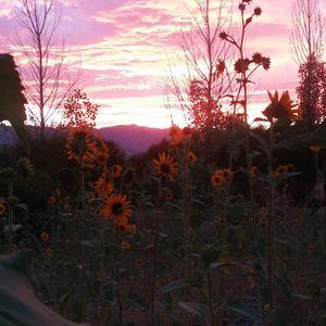 Summers Sunset