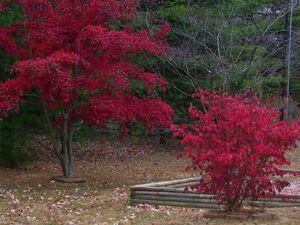Fall beauties