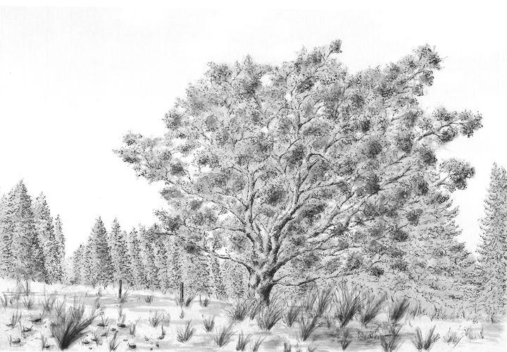 Old tree - LucieHAVRANKOVA