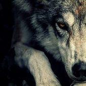 WolfspawnArt