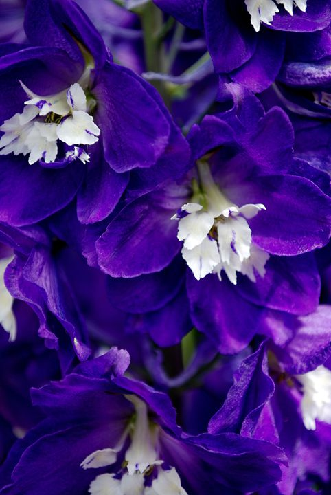 Purple Flowers - Emily O'Donnell's Fine Art Photography