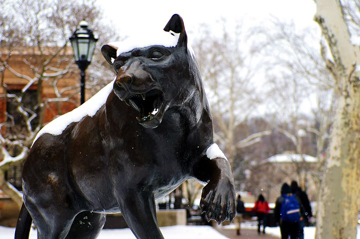 Pitt Panther - Emily O'Donnell's Fine Art Photography