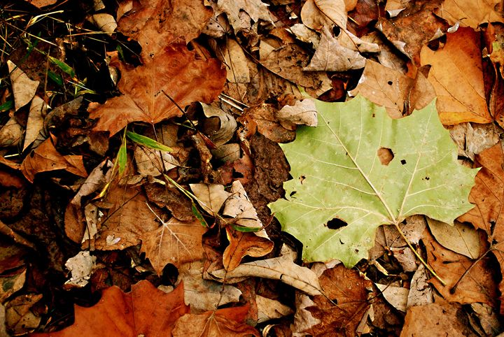 Autumn Leaves - Emily O'Donnell's Fine Art Photography