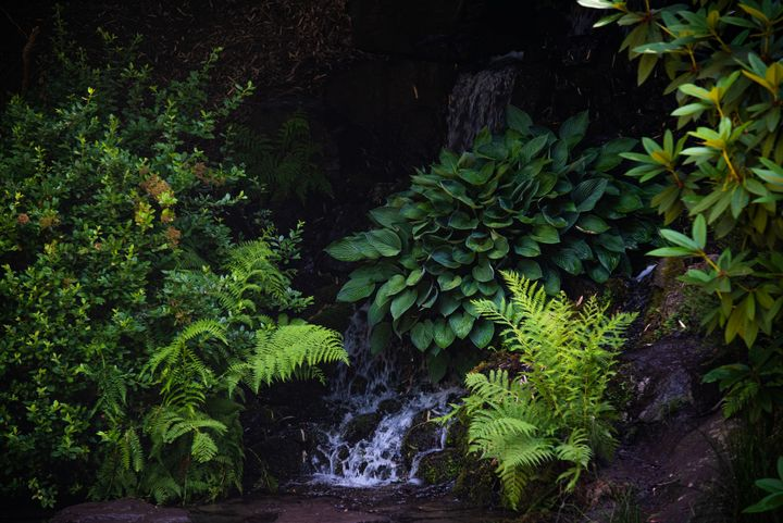 Green Fern Hollow - Emily O'Donnell's Fine Art Photography